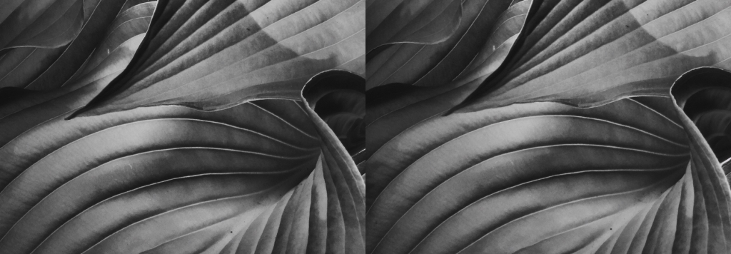 stereo of the hostas, with Topaz filters applied